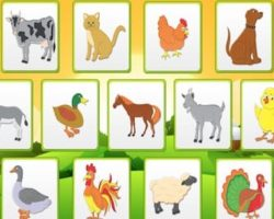 fun learning animal